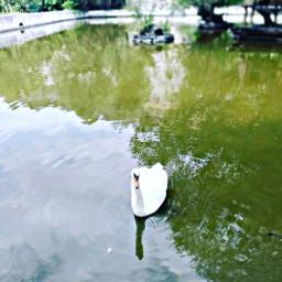 река лебедь freetoedit