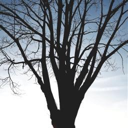 tree branches nature baretree minimalism photography myphoto