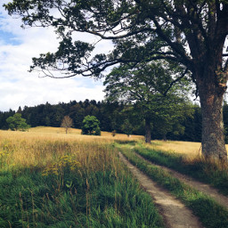 freetoedit summer road dirtroad grassland tree grass forest vacation holliday beautifulday beautifulnature myphoto poland