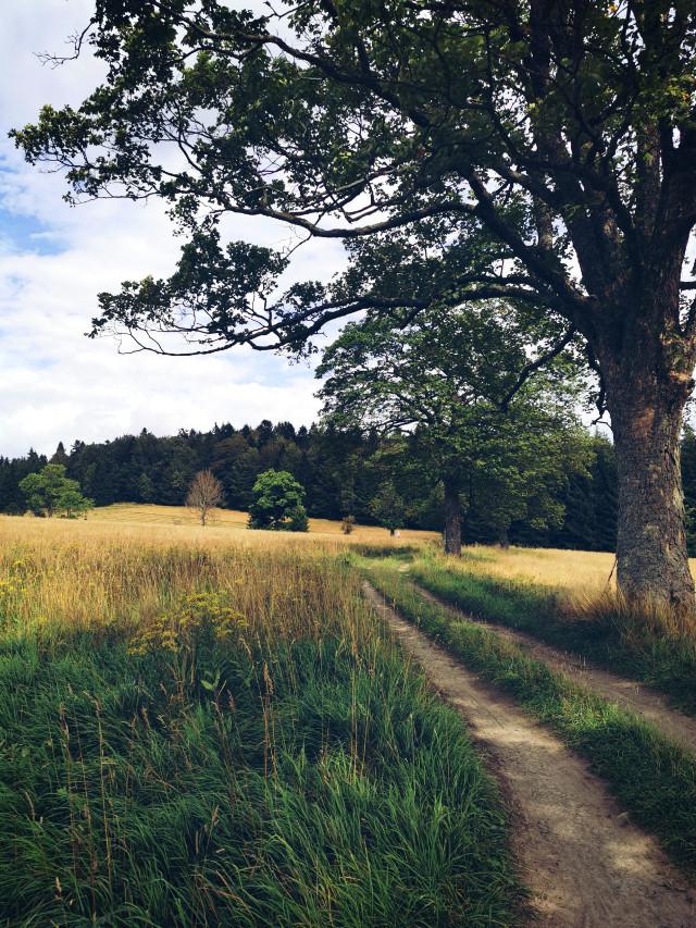 #freetoedit #summer #road #dirtroad #grassland #tree #grass #forest #vacation #holliday #beautifulday #beautifulnature #myphoto #Poland