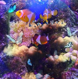 sea art nature butterfly anemonefish srcetherealbutterflies freetoedit