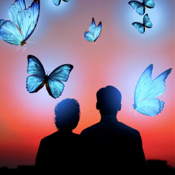 butterfly butterlies couple bluelights picsartreplay freetoedit