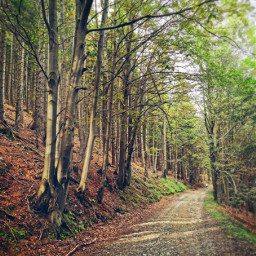 summer hiking road forestroad trees forest vacation holliday beautifulday beautifulnature myphoto freetoedit