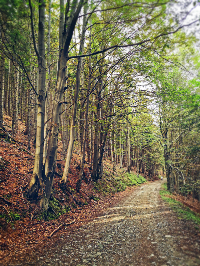 #summer #hiking #road #forestroad #trees #forest #vacation #holliday #beautifulday #beautifulnature #myphoto