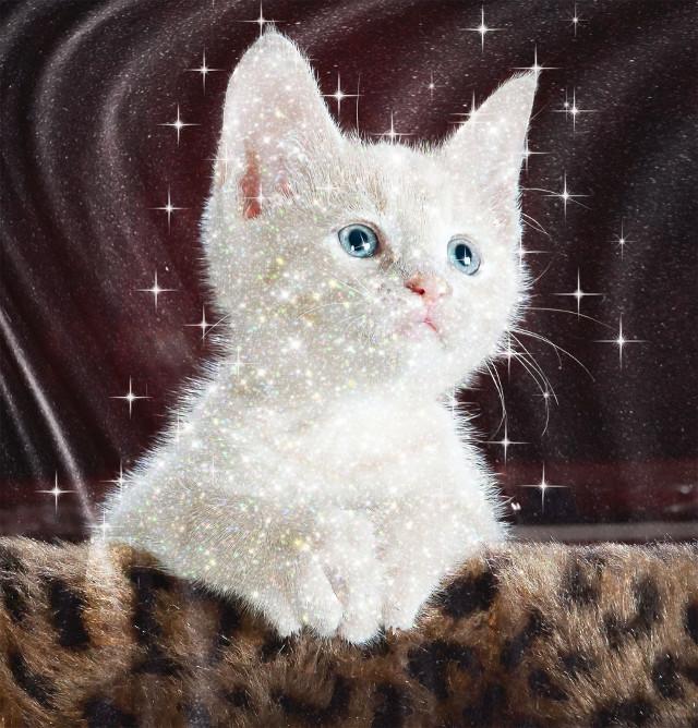 #freetoedit #cat#cutecat#edit
