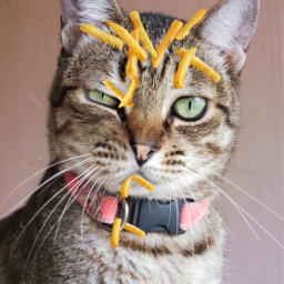 freetoedit cat frenchfries picsarteffects madewithpicsart