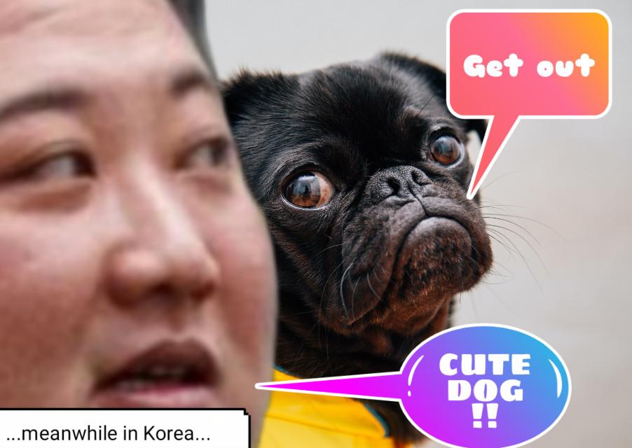 #doglife in korea #sad #hungrydog #hungry  God save this people. 🙏🙏🙏