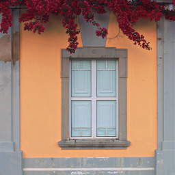 freetoedit urbanexploration house architecture oldarchitecture frontwall grungetexturedwall yellowandgray window stoneframed architecturalornaments olddesign straightlines retrolook bougainvilleas urbannature cobblestonepavement urbanexploringphotography