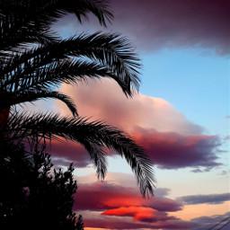 freetoedit sunset pink palmtree palmtrees palm sky cloud clouds cloudy aesthetic summer sunrise