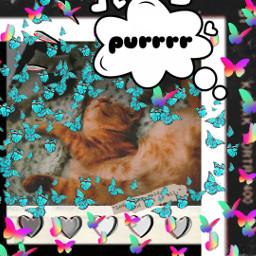 kitty kittycat kittylover sleepytime purrfect peacefulness softkittywarmkitty ilovemycat freetoedit