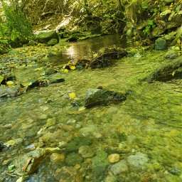 summer green river freetoedit