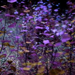 freetoedit purple background photography myphoto edit art makeawesome colors nature interesting inspire remixit remixme like love follow heypicsart