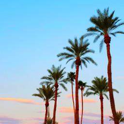 summervibes palmtrees vacation clouds colorfulsky pinkandblueclouds myoriginalphoto palmsprings sunset destinations colorful freetoedit