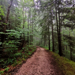 road dirtroad forestroad forest mountains travel adventure afterrain foggyday landscape myphoto nofilters freetoedit