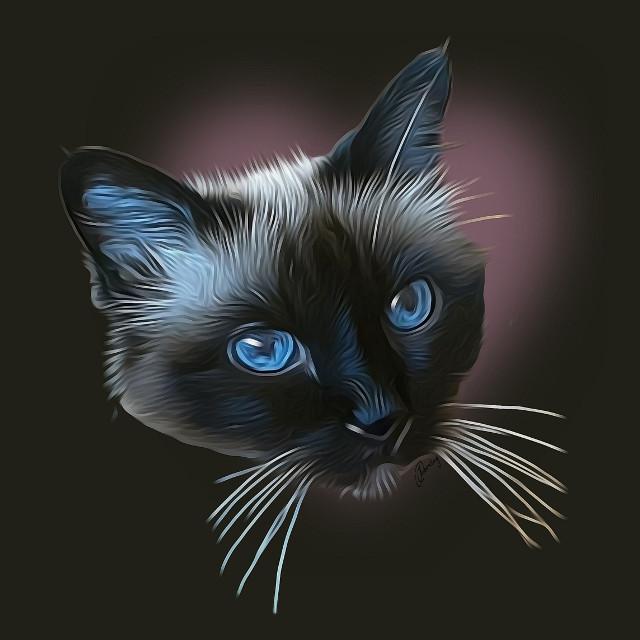 Beautiful Poekie is 18 years old! #petsandanimals #catfriends #beauty #cute #animals #animal #cat #kat #18yearsold #paintingphotography #paintingeffect #photoedit #catartwork #catart