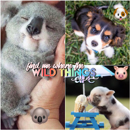 cute animal lover koala puppy pig icecream adorbs cutenessoverload emoji freetoedit