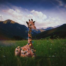 picsart madewithpicsart manipulation surreal amazing giraffe remix@freetoedit colochis89 happy freetoedit remix colochis89