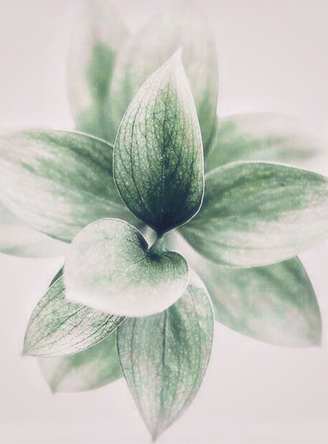 #plant #leavesgreen #patternsinnature #plant #houseplant #light #lightaesthetic #mellow_light #softness #highangleshot #moodyedit #indoorphotography                                                                                              #freetoedit