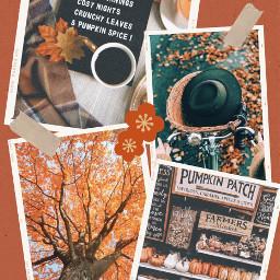 autumn autumnleaves autumncolours pumkin quote ccautumnmoodboard autumnmoodboard