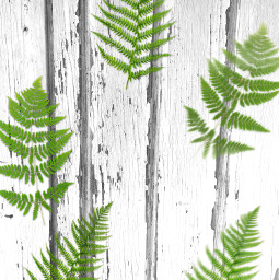 freetoedit background wallpaper template myphoto leaves paeffects