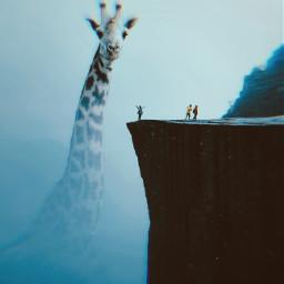 giraffe cliff freetoedit unsplash