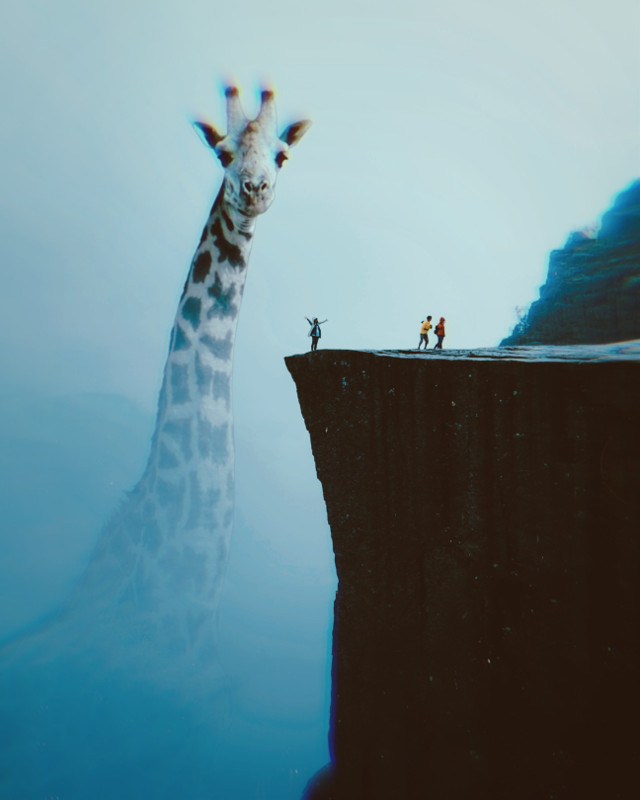 #giraffe #cliff