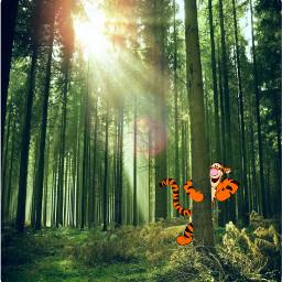 tigger forest winniethepooh tree trees hideandseek tiger bounce freetoedit