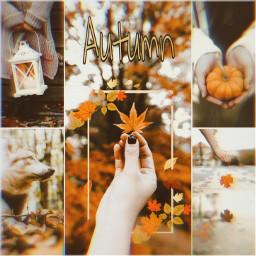 autumn осень freetoedit unsplash ccautumnmoodboard autumnmoodboard