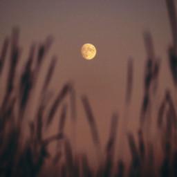 freetoedit nature dusktime twilight wildplants grass silhouettes foregroundblur themoonabove lowangleshot naturephotography