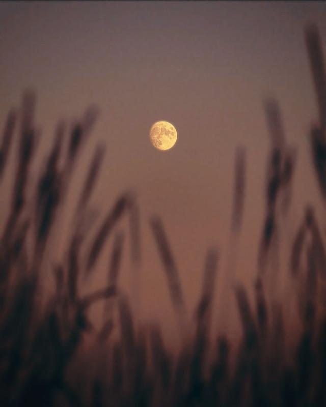 #nature #dusktime #twilight #wildplants #grass #silhouettes #foregroundblur #themoonabove #lowangleshot #naturephotography