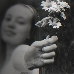 replayedit blackandwhite doubleexposure blureffect flowers myedit blends freetoedit