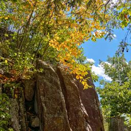 naturephotography hikingtrail firstsignsoffall freetoedit