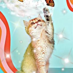 freetoedit cat clouds rainbow stars butterflys myedit editwithpicsart picsart