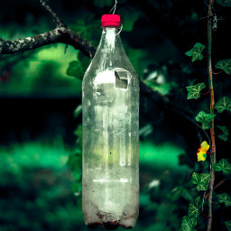 bottle pollution pear peartree photography naturephotography naturelovers shoutout green greenaesthetic greenminimalism greenleaves greenleaf leaf leaves afterrain raindrops rain forest forestphotography galicia pollutionisbad freetoedit