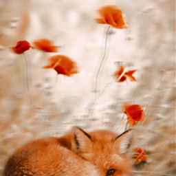 freetoedit fox flowers