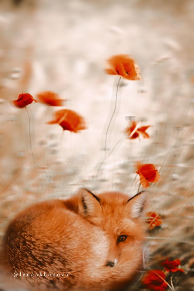 #freetoedit#fox #flowers  — — 🦊🙌🏻🧡🍂🌺 -- https://youtu.be/gOrz2y28a3A --