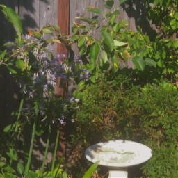 flowers yard garden plant plantlove aesthetic vintage indie etheral earthangel wattpadcover summer santacruz myphotography cute sunshine