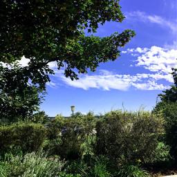 nature drausen summer firmung büsche photography himmel wolken baum grün blau