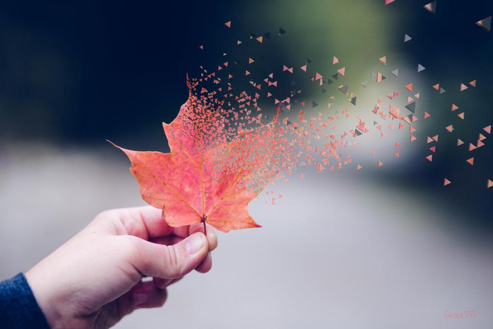 #fall #dispersion #dispersiontool #dispersioneffect #leaf #hand