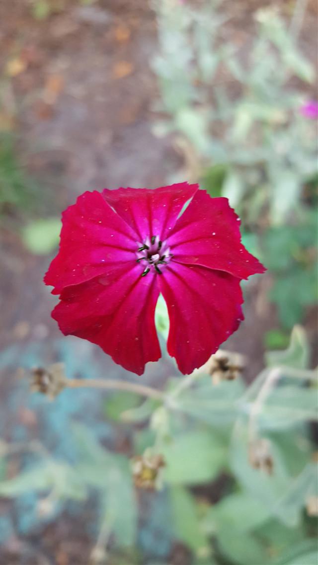 #bunia0914 #myphoto #myoriginalphoto #myclick #naturephotography #garden #mygarden #summer #garden #mygarden #summer #summertime #nature #plant #plants #flowers #green #red #redflower #beautifulday #happyday