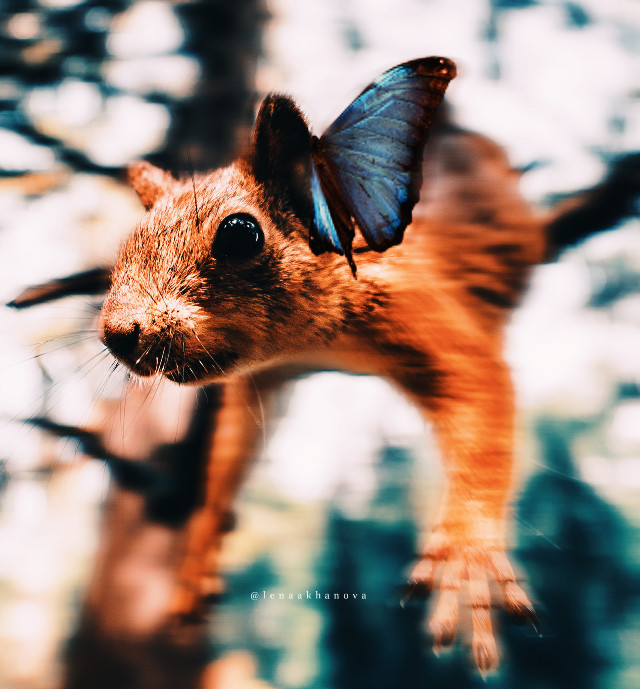 #squirrel #butterfly  — — 🙌🏻🐿🦋