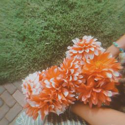 flower aesthetic cottagecore pettingzoo