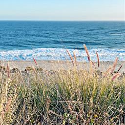 beachview beach beachvibes beachphotography beachside like follow freetoedit
