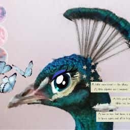 peacock aesthetic cartooneyes freetoedit eccartoonifiedanimals cartoonifiedanimals