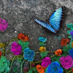 heypicsart mastershoutout flowers colorful nature butterfly myedit madewithpicsart picsarteffects beautifytool oilpaintingeffect maskeffect grungemask freetoedit