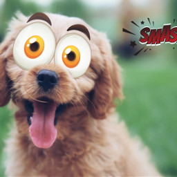 freetoedit challenge dog mrlb2000 lol comic awesome eccartoonifiedanimals cartoonifiedanimals