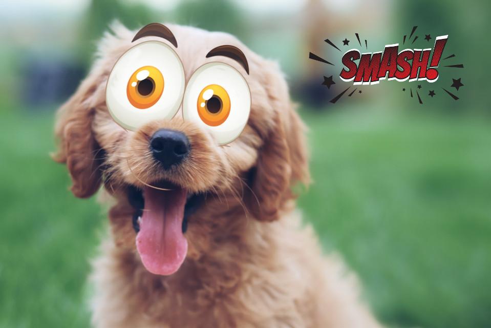 #freetoedit#challenge#dog#mrlb2000#lol#comic#awesome @pa @freetoedit
