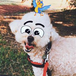 cartooneyes dog mydog freetoedit