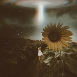 fall september sunflower storm alone freetoedit