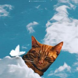 sleeping cat sky